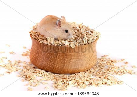 oat flakes in a wooden bowl with a hamster isolated on white background.