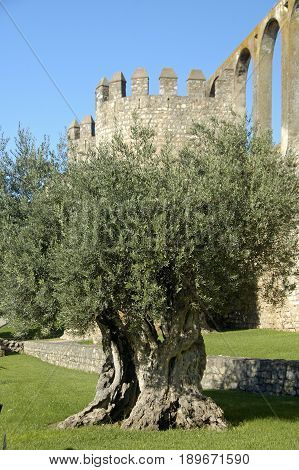The ruins of an ancient aquaduct in Portugal with an olive tree in front of it.