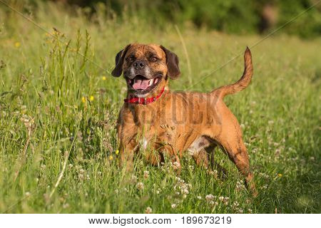 Cute Happy Dog Playing Fetch With Ball In Long Grass