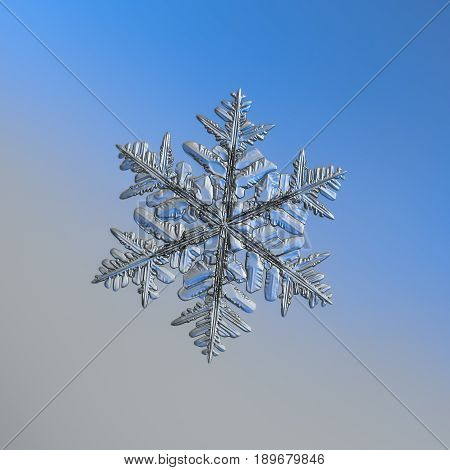 Real snowflake macro photo: large snow crystal of stellar dendrite type with glossy, relief surface and six elegant arms with many side branches. Snowflake glitter on gray - blue gradient background.