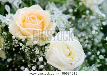 Beautiful white and pink rose in a floral decoration