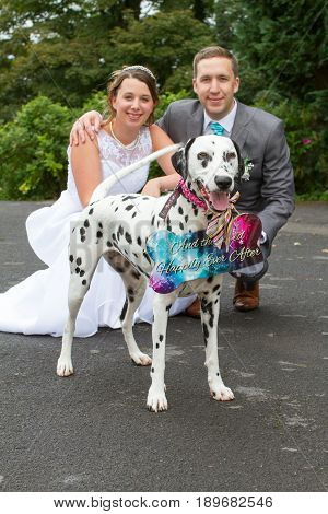 Bride And Groom And Their Dog At Their Wedding