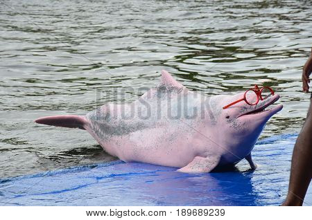 The Pink Dolphin at the swimming pool