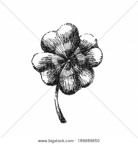 Clover leaf. Hand drawn image over white