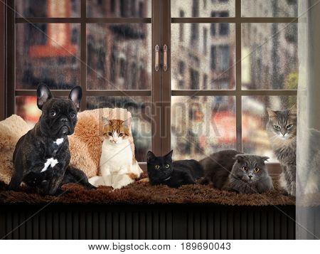 lot of cats and a dog on the windowsill. Outside the rain city street drops of water. In the house cozy and warm