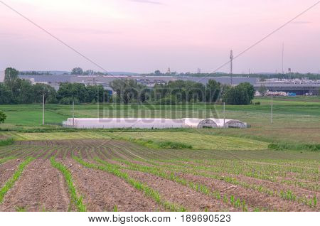A group of greenhouses on the fields. Polythene tunnel as a plastic greenhouse on the fields.