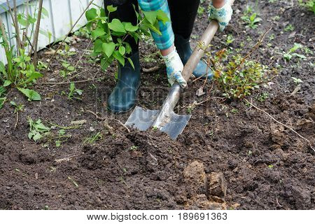 Woman Digging The Ground With A Shovel On A Close-up Of A Garden