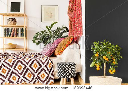 Orange Tree In Bedroom