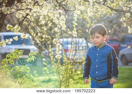 Adorable Kid Boy Portrait In Blooming Cherry Garden, Walking Outdoor. Child Exploring Flowers On Blo