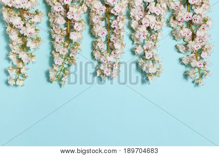 Spring aqua blue background with white blooming chestnut flowers and empty place for your text, close-up top flat view