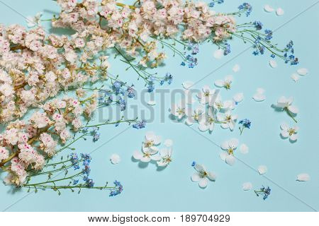 Spring aqua blue background with white blooming chestnut, apple and forget-me-not flowers, close-up perspective view, arc composition