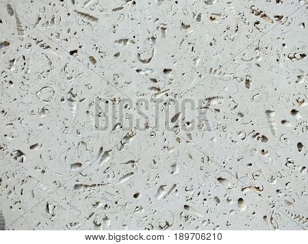 slab of white fossil limestone used in paving and construction