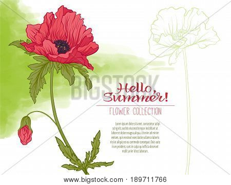 A poppy flower on a green watercolor background. The flowers in the botanical style, minimalistic design. Place for the inscription. Hello summer Stock line vector illustration.