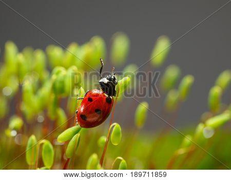 Ladybird Wave From Moss Top