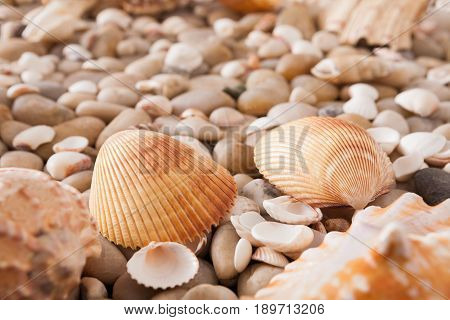 Sea pebbles and seashells background. Natural seashore stones textured surface