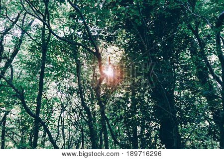 Sun shines and rays through forest thicket