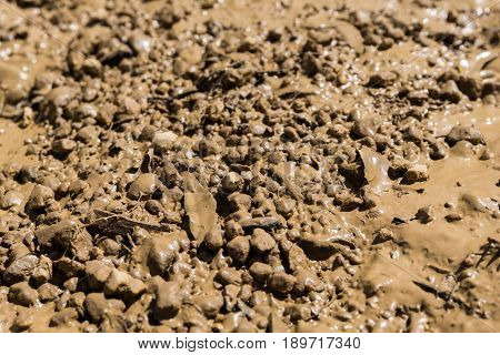 View on brown Earth, Wet Ground. Close-up of Damp Soil. Arable Land. Fertile Soil
