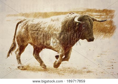 Bull color cinnamon galloping at a bullfight Andalusia Spain