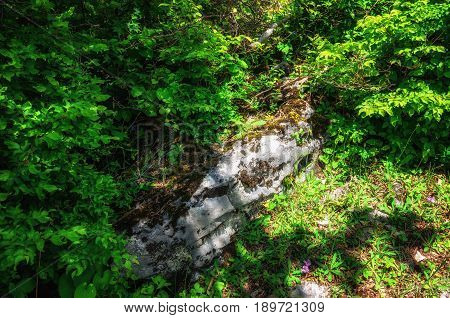 Green trees, moss and rocks background. Nature and spring in Georgia. Top view.