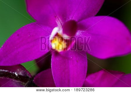Small Purple Orchid Close Up