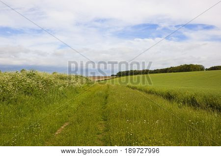 Bridleway With Wildflowers