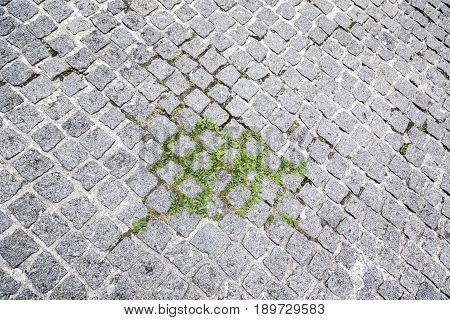 Cobbles On The Ground With Grass