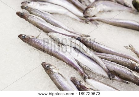 Sardines In A Fish Market