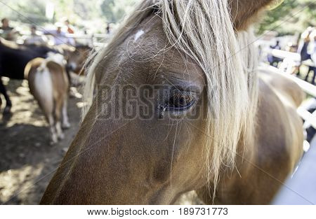Wlid Horse