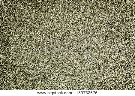 Grass Background With Texture