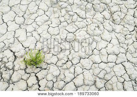 background of dry and cracked  desert soil wit a green plant at Book Cliffs area in eastern Utah
