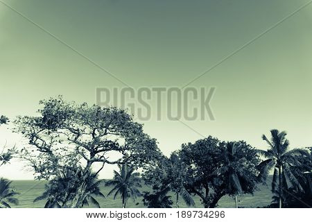 Split toned green hue sea and horizon through trees and palm trees below clear sky