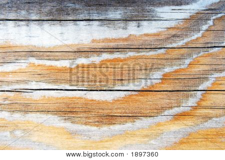 Dried Up Wood