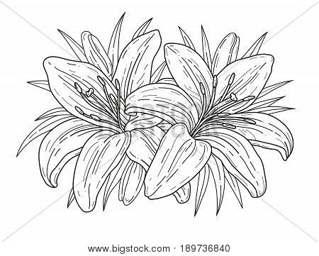 Lilies flowers monochrome vector illustration. Beautiful tiger lilies isolated on white background. Element for design of greeting cards and invitations