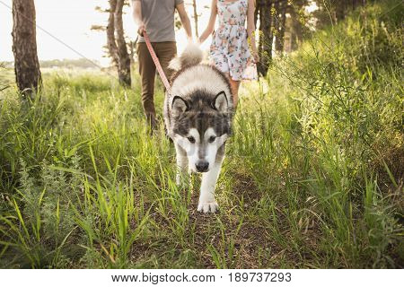 Couple with a dog, Husky Malamute, sunset forest
