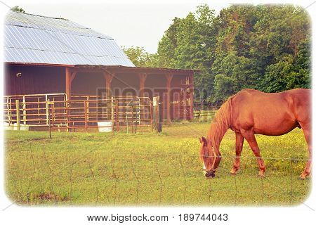 A old photo of a horse grazing near an old red barn.