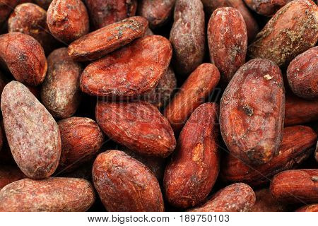 A close up image of whole cocoa beans
