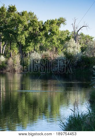 Fishing hole with a ripple in the water from a jumping fish photographed at sunset. Deciduous trees are in the background.