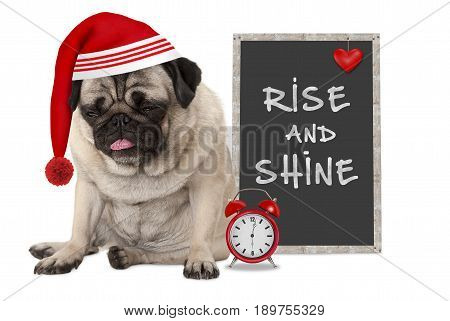 getting up in early morning grumpy pug puppy dog with red sleeping cap alarm clock and sign with text rise and shine isolated on white background