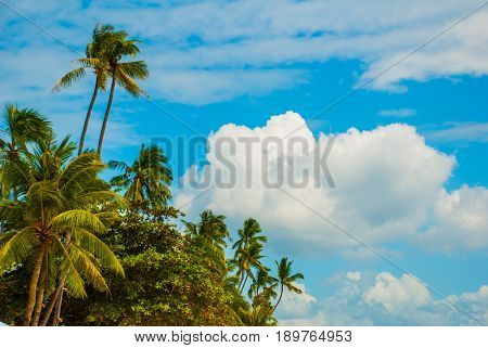 Tropical Landscape With Palm Trees Against The Blue Sea. Island, Bohol. Philippines