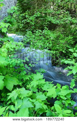 Creek waters rushing through a mountain forest