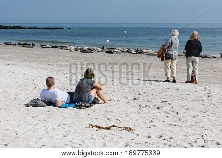 HELGOLAND GERMANY - MAY 20 2017: Tourists watching grey seals lying at beach of Dune