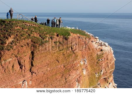 HELGOLAND GERMANY - MAY 21 2017: Bird watchers near breeding Northern Gannets at red cliffs of Helgoland