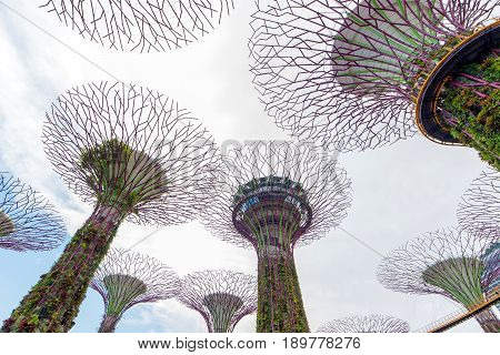 Singapore - February 14, 2017: Supertrees At Gardens By The Bay  Landscape In Singapore