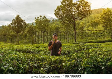 The young man tastes the tea Bush to the tea plantation.. Tourist in Munnar Kerala India.