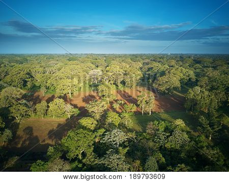 Green Forest In Nicaragua