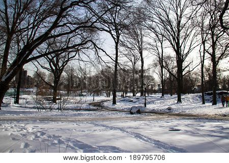 Trees and footsteps on snow in wintertime
