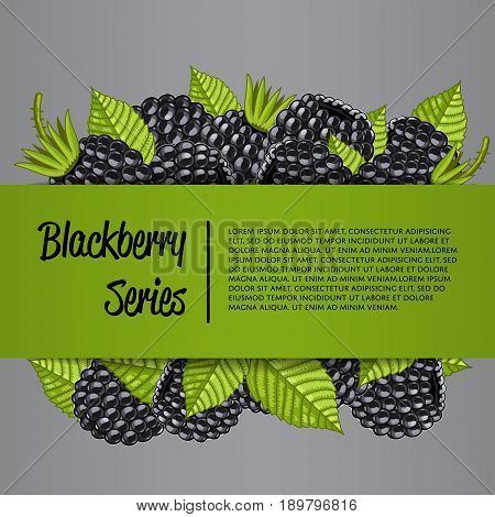 Blackberry series banner with organic berry vector illustration. Natural fruit poster, healthy sweet diet, vegetarian nutrition. Fresh berry fruit advertising promo with ripe blackberry and leaves.