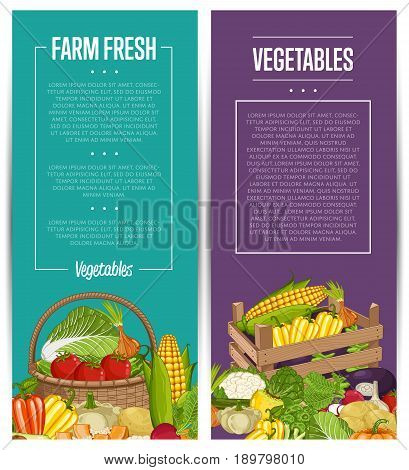 Organic vegetable farming flyers set vector illustration. Natural growing vegetable, vegan retail, product store poster. Healthy farm food advertising with patison, potato, pumpkin, cabbage, tomato