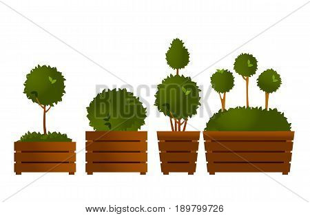 Vector illustration set of garden seedlings tree in boxes topiary