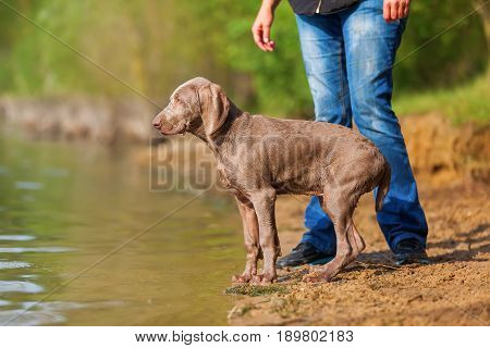 Person With Puppy At The Border Of A Lake